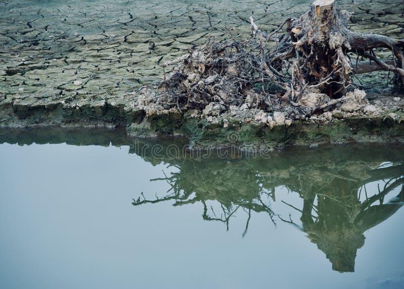 Un albero morto si separa la sua riflessione sulla fotografia dell'acqua fotografia stock libera da diritti