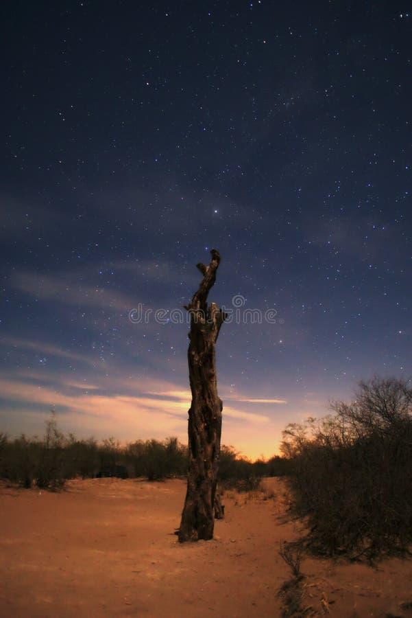 Un albero morto sotto un cielo stellato sulle sabbie del deserto fotografie stock libere da diritti