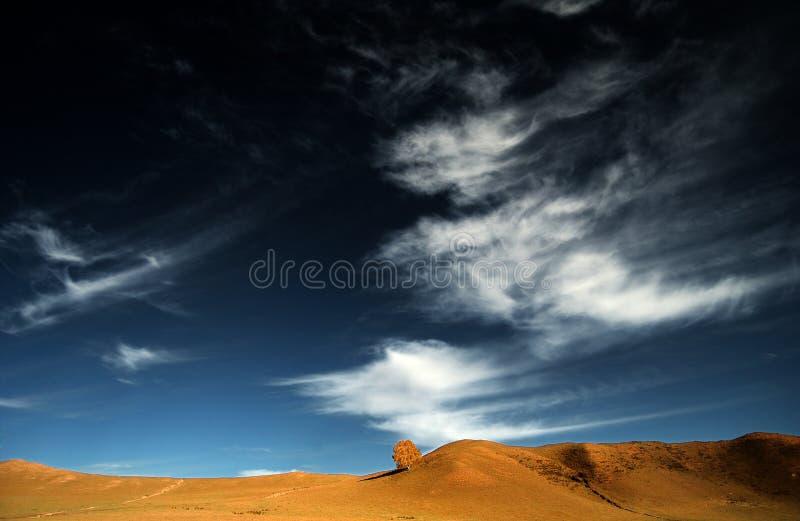 un albero nel cielo blu immagine stock