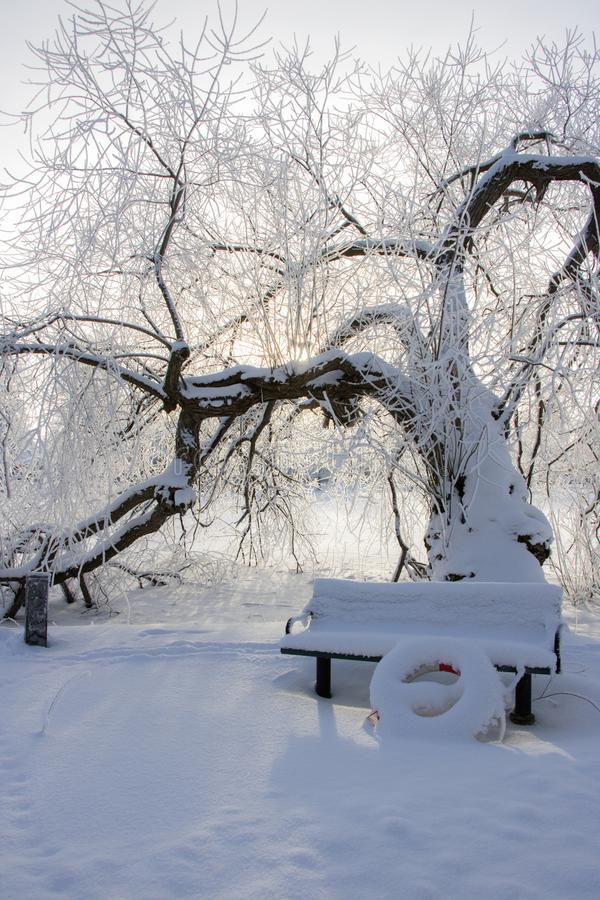 Un albero nudo in un paesaggio nevoso fotografie stock libere da diritti