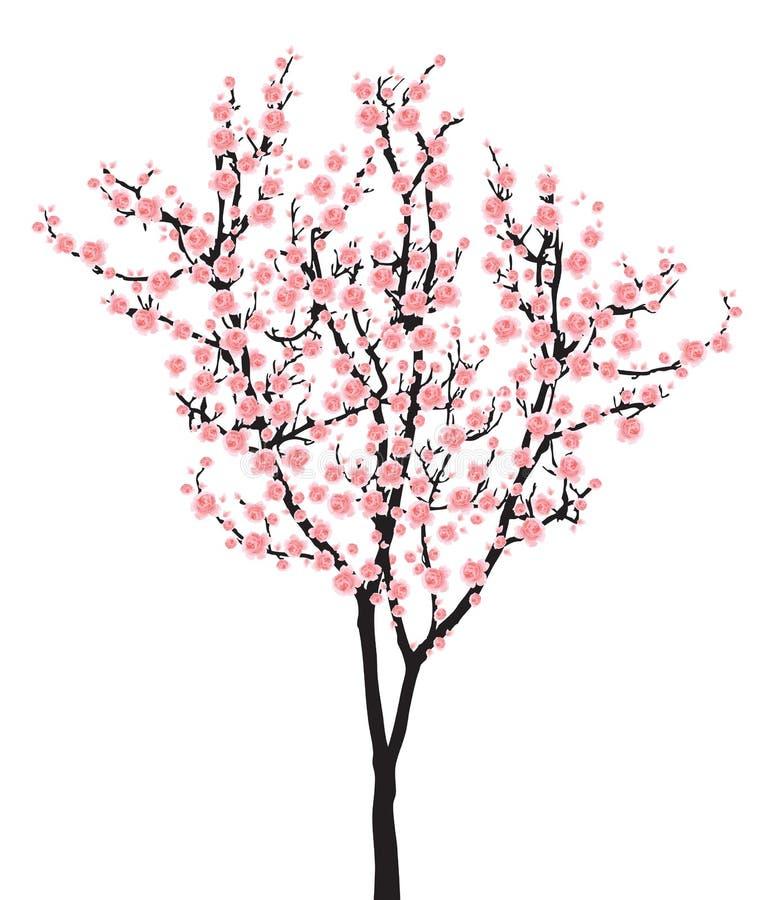 Un albero rosa di sakura della piena fioritura (fiore di ciliegia) su fondo bianco illustrazione vettoriale