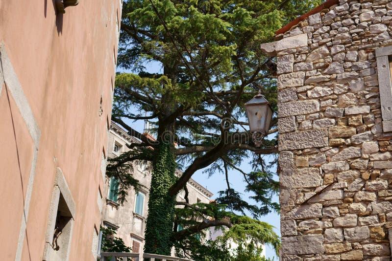 Un albero sempreverde intrappolato nelle strade strette fotografie stock
