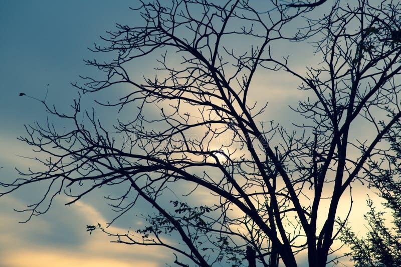 Un albero senza fogli fotografia stock libera da diritti