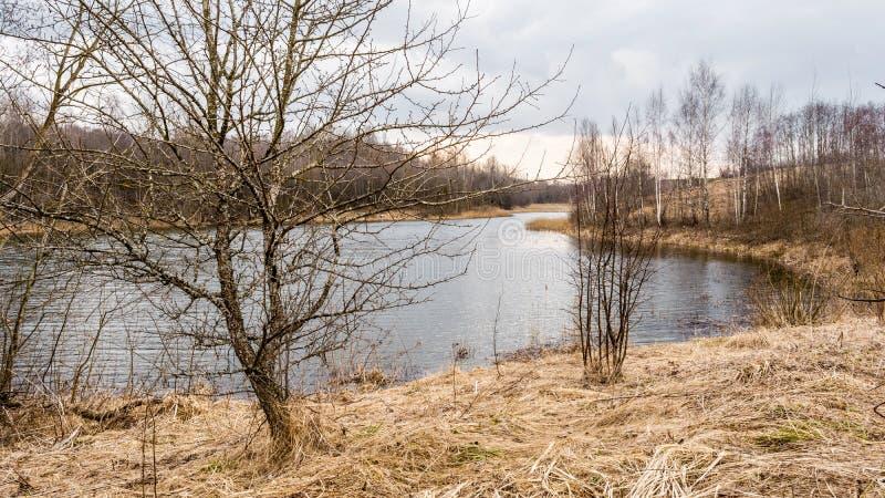 Un albero senza foglie ed erba asciutta sulla riva di un bacino idrico, lago della foresta e cielo con le nuvole, tempo nuvoloso  fotografia stock libera da diritti