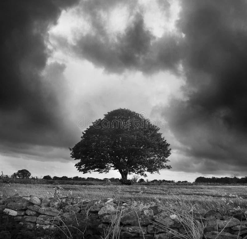 Un albero solo immagine stock libera da diritti