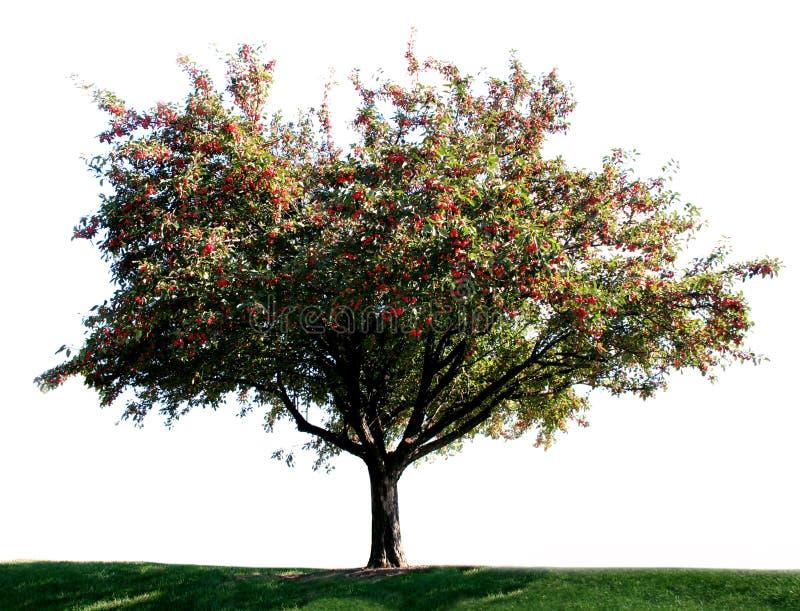 Un albero solo immagini stock libere da diritti