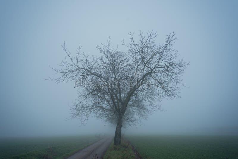 Un albero solo in campagna nebbiosa fotografia stock libera da diritti