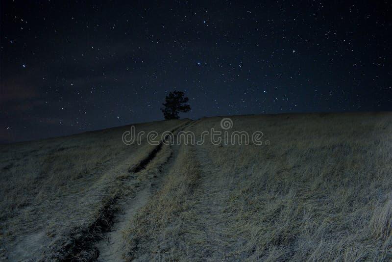 Un albero solo si siede su una collina sotto le stelle fotografie stock libere da diritti