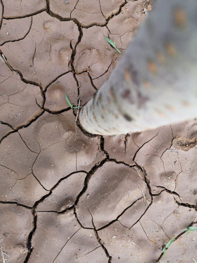 Un albero sta piantando nel suolo immagine stock libera da diritti