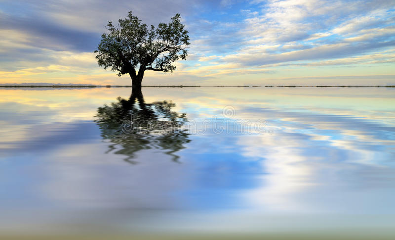 Un albero sul lago fotografie stock