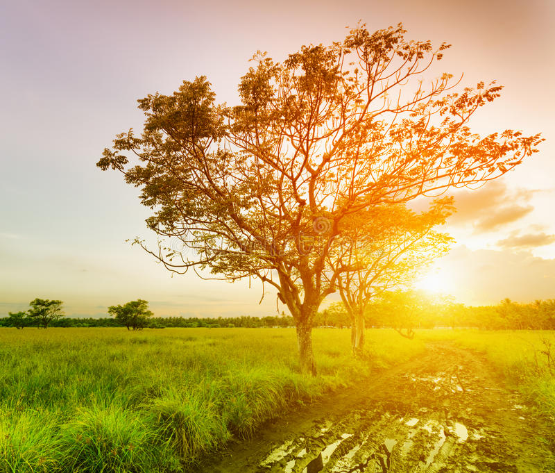 Un albero a tempo di tramonto immagini stock