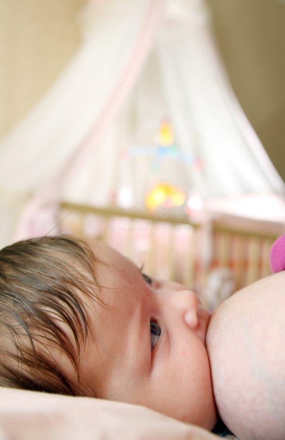 Un allattamento al seno del bambino del bambino fotografia stock libera da diritti
