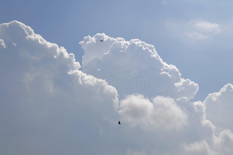 Un'alta nuvola bianca dei cumuli prima di un temporale gli uccelli salgono su immagine stock