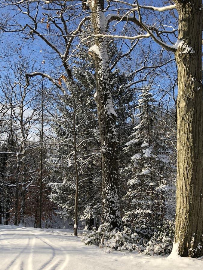 Un altro bello giorno nevoso immagini stock libere da diritti