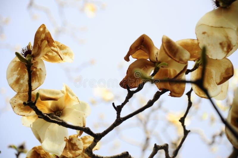 Un altro fiore della molla in Cina fotografie stock libere da diritti