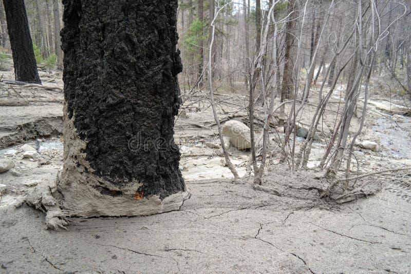Un alud de lodo de la primavera a través del bosque imagenes de archivo