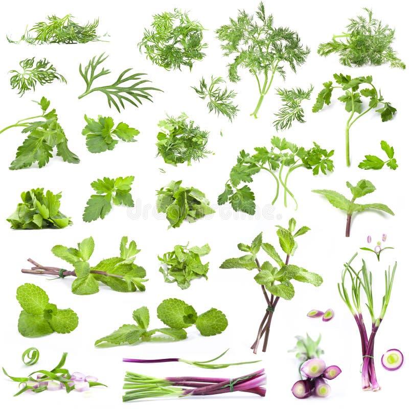 Un'ampia raccolta delle erbe e delle spezie fresche immagine stock