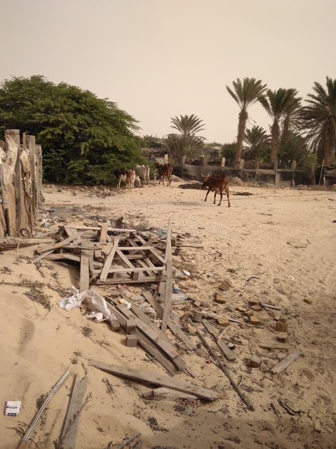 Un angolo di un'oasi del deserto fotografia stock libera da diritti