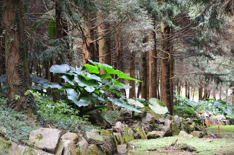 Un angolo di una foresta immagini stock libere da diritti