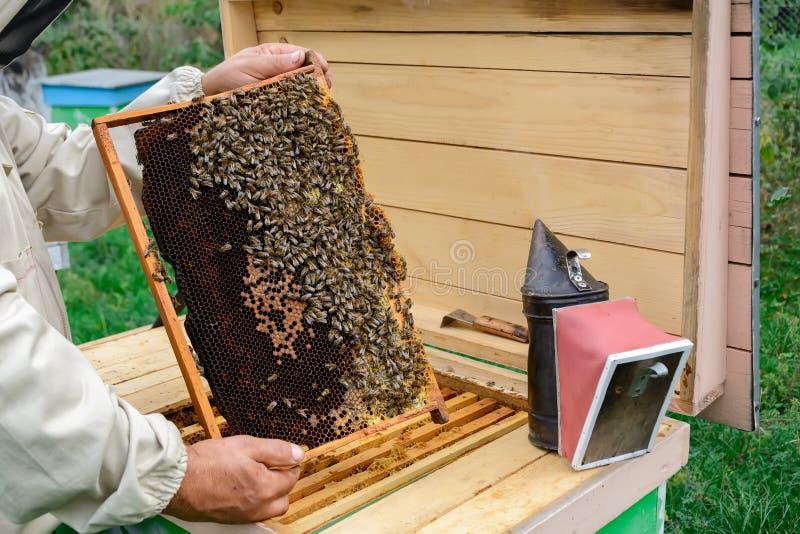 Un apiculteur à la ruche regarde au-dessus d'un nid d'abeilles avec des abeilles rucher photographie stock libre de droits