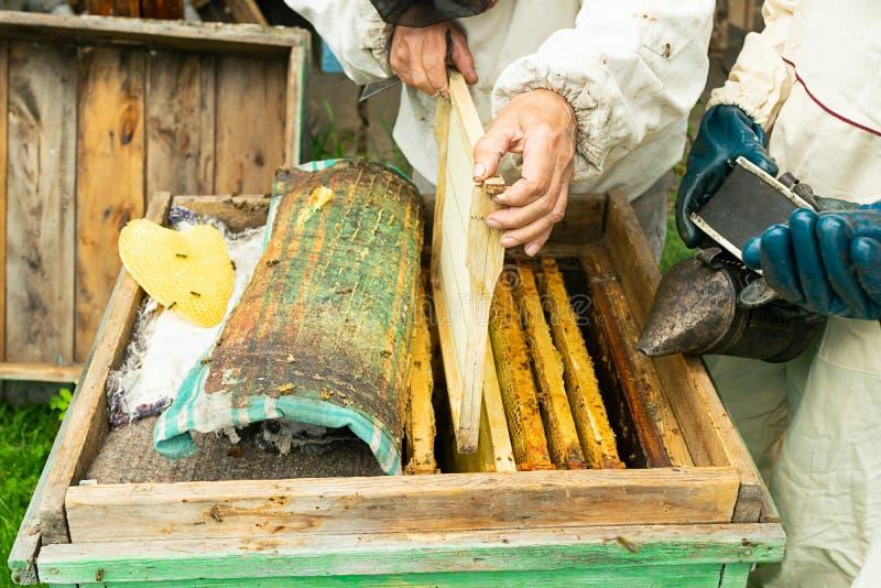 Un apiculteur vérifie les cadres de ruche et de miel des abeilles Travail de l'apiculture sur le rucher Foyer s?lectif image stock