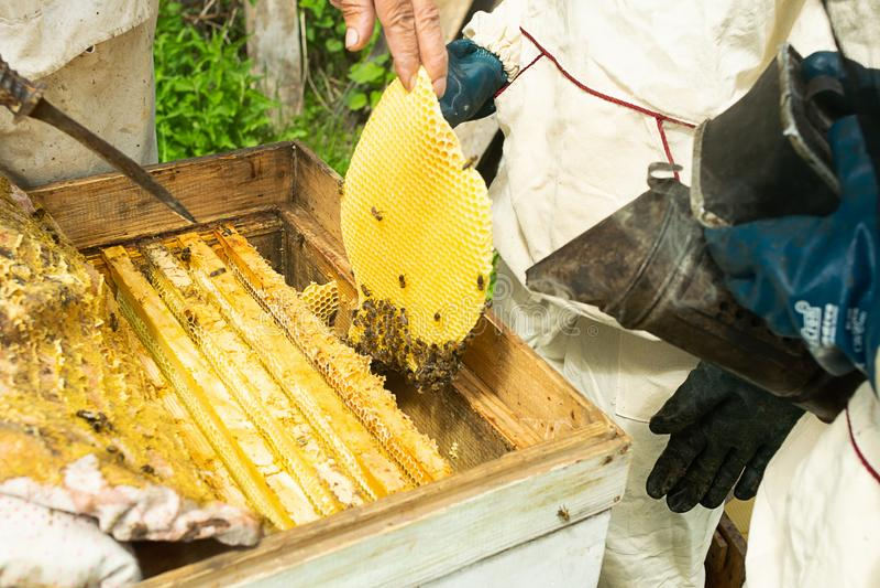 Un apiculteur vérifie les cadres de ruche et de miel des abeilles Travail de l'apiculture sur le rucher Foyer s?lectif photos libres de droits