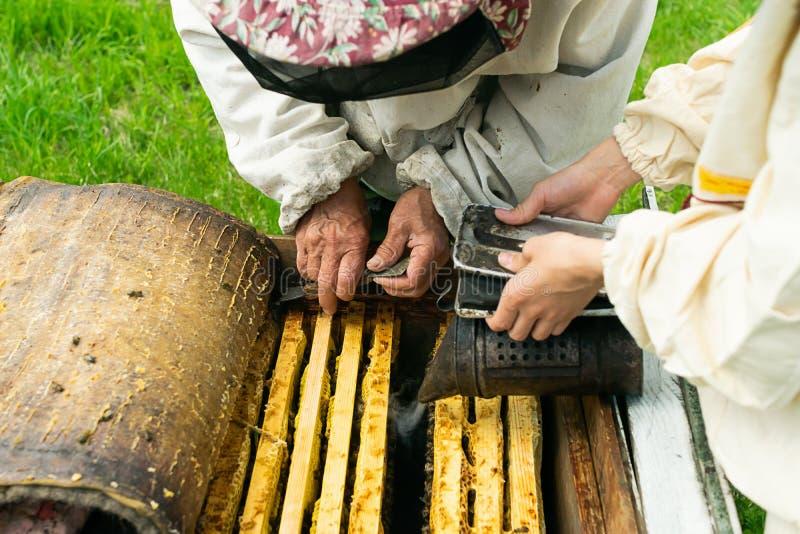 Un apiculteur vérifie les cadres de ruche et de miel des abeilles Travail de l'apiculture sur le rucher Foyer s?lectif photographie stock