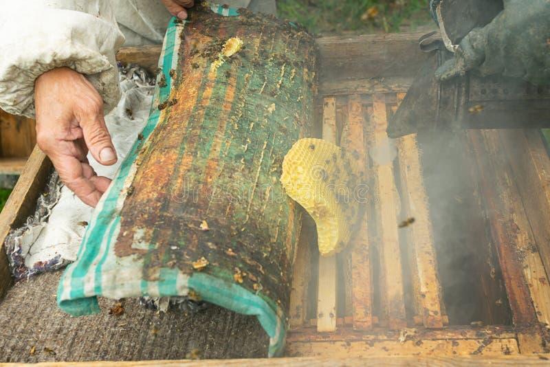 Un apicultor comprueba los marcos de la colmena y de la miel de abejas Trabajo de la apicultura sobre el colmenar Foco selectivo imágenes de archivo libres de regalías