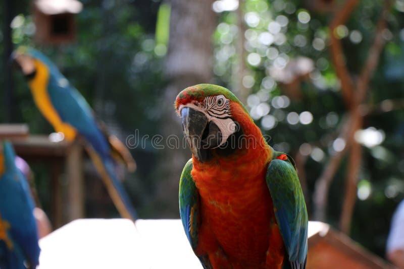 Un'ara nello zoo immagini stock