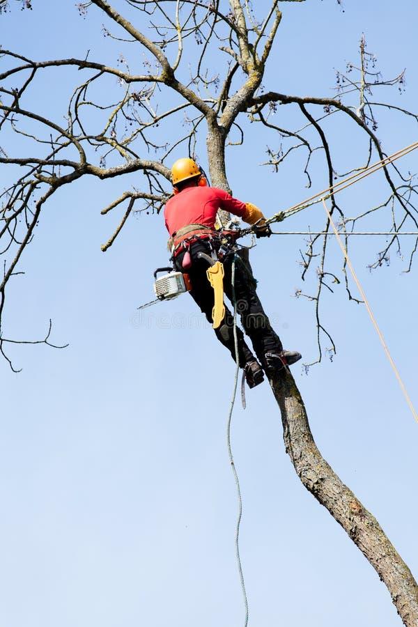 Un arboriste coupant un arbre image libre de droits