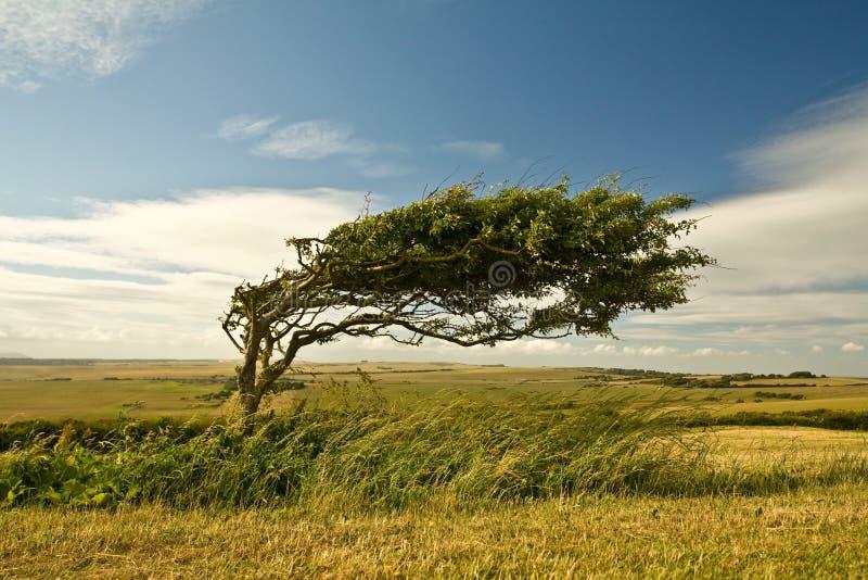 Un arbre photographie stock