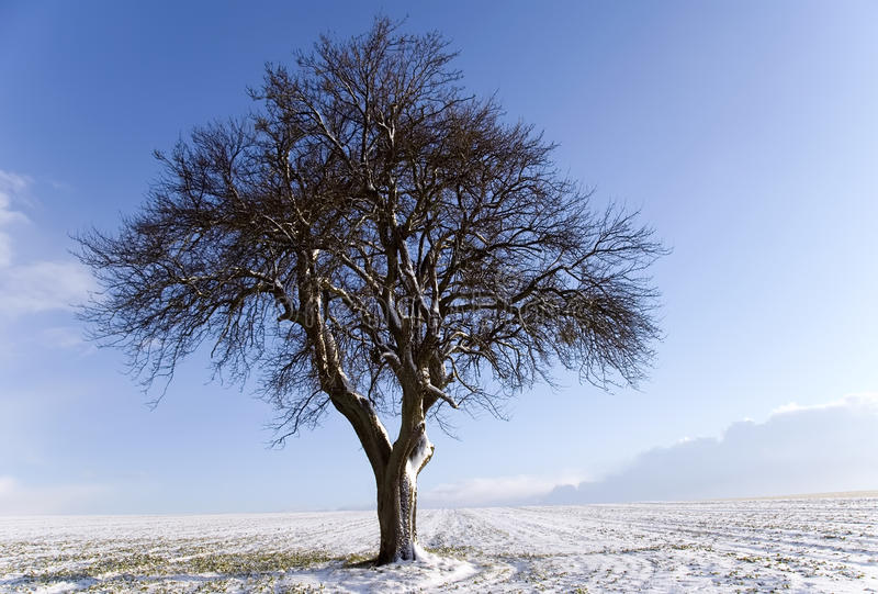 un arbre photographie stock libre de droits