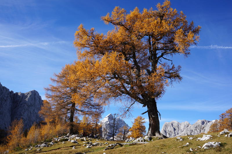 Un arbre images stock