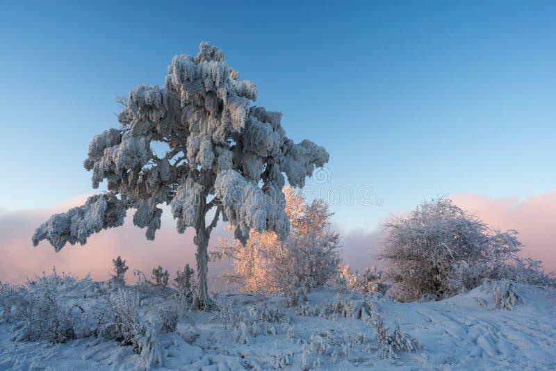 Un arbre avec des branches couvertes de ¼ de snowÐ photographie stock libre de droits