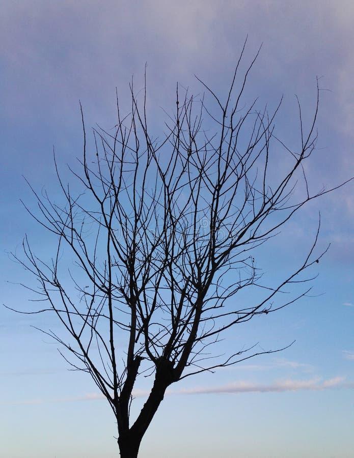 Un arbre d'hiver sur un fond de ciel coloré image libre de droits