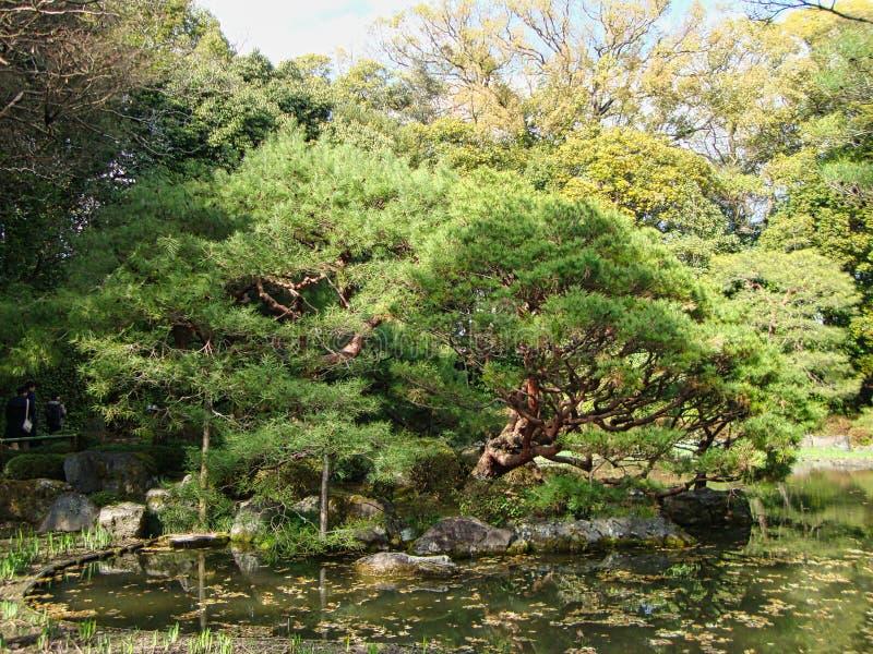 un arbre de bonsaïs dans un étang au Japon images stock