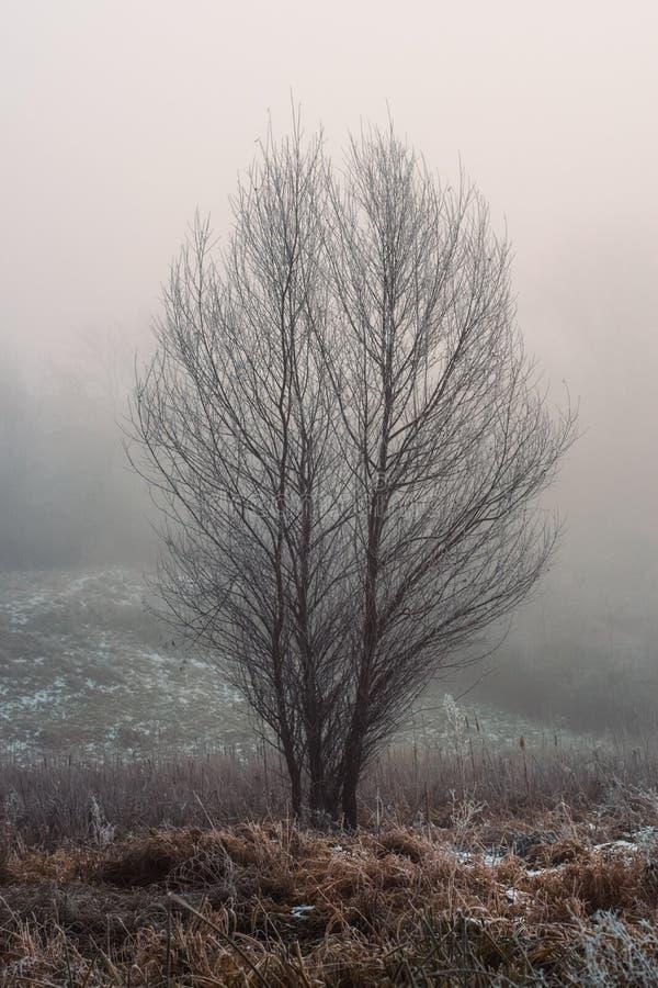 Un arbre en clairière dans un brouillard photographie stock