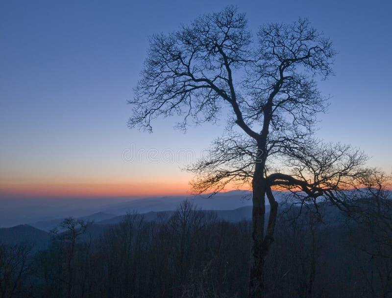 Un arbre en hiver avec le ciel de coucher du soleil au parc national de Great Smoky Mountains images libres de droits