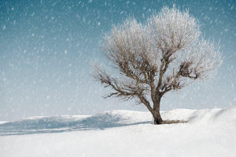 Un arbre en hiver, ciel bleu avec la neige sur le fond, beau paysage sauvage, concept de nature photographie stock libre de droits
