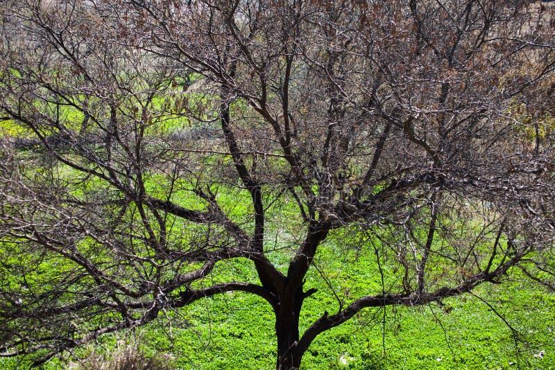 Un arbre en hiver images stock