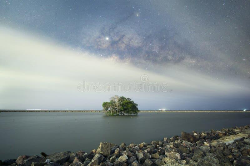 Un arbre et la manière laiteuse L'atmosph?re de nuit Forêt de palétuvier à ao Mahachai, Samut Sakhon photos stock