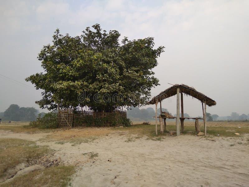 Un arbre et une hutte de watt sur la rive photos stock