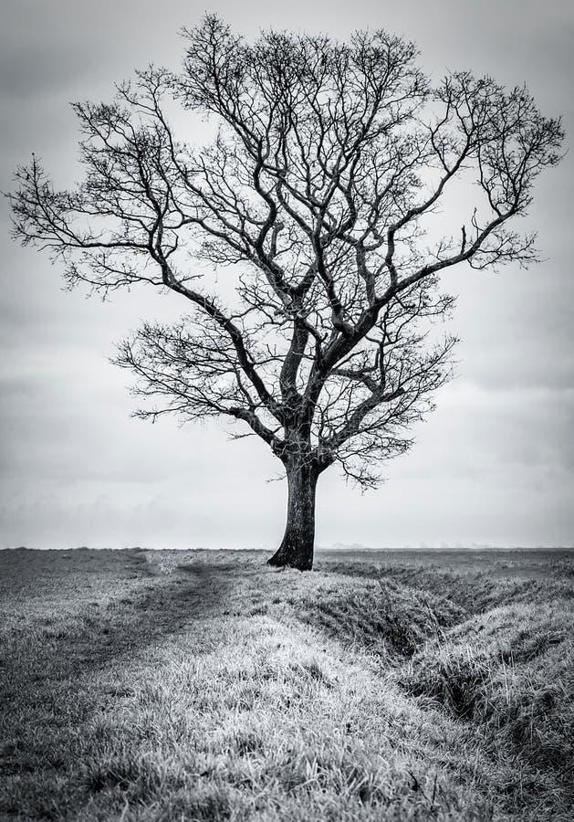 Un arbre isolé image stock