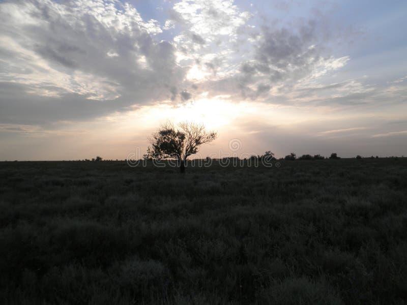 Un arbre isolé dans la steppe dans la perspective du ciel de soirée photo stock