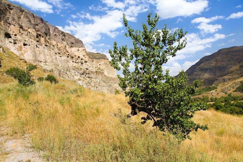 Un arbre isolé se développe dans la perspective de la ville antique o photos libres de droits