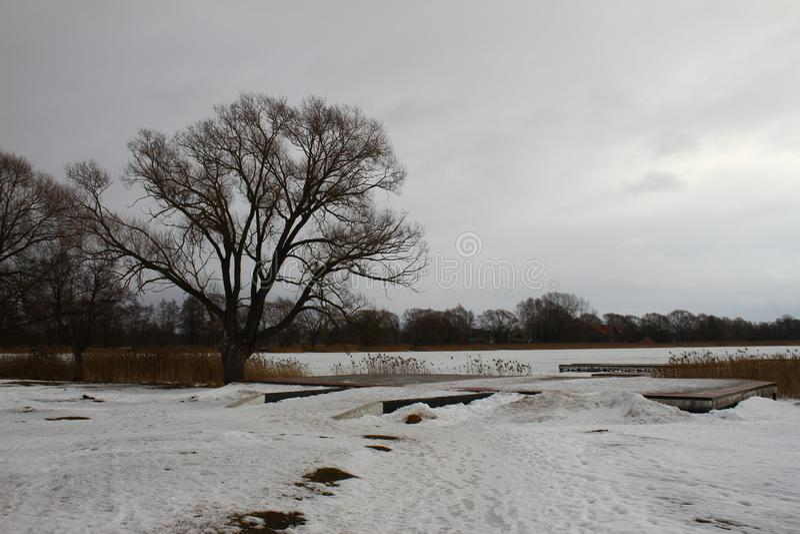 Un arbre isolé sur le rivage d'un lac congelé images libres de droits
