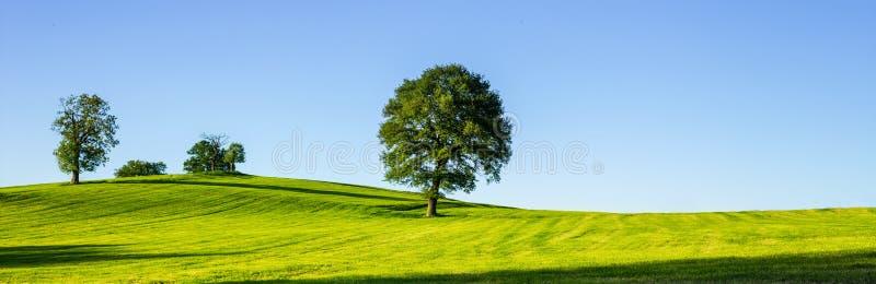 Un arbre isolé sur un pré vert, un paysage rural vibrant avec photos libres de droits