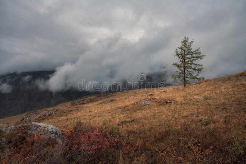 Un arbre isolé sur un fond d'un paysage d'automne et d'un ciel sombre lourd photos libres de droits