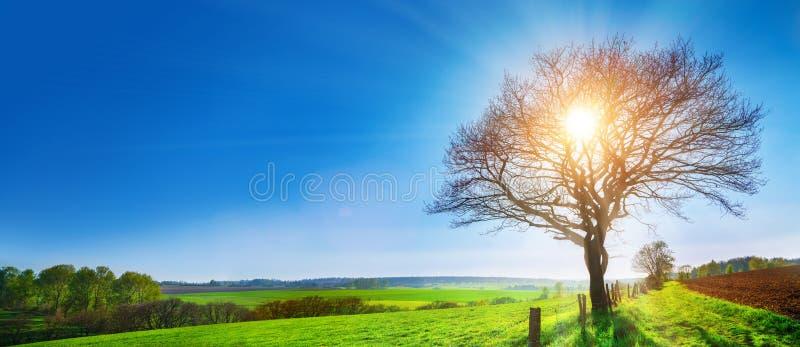 Un arbre isolé sur un pré vert, un paysage rural vibrant avec photo libre de droits