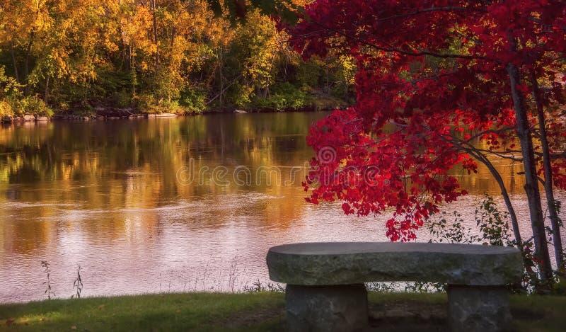Un arbre lumineux avec un feuillage rouge d'automne s'est plié au-dessus d'un banc sur la berge images stock